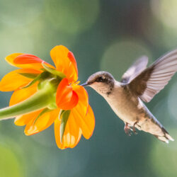 Creating a Desert Garden That Attracts Hummingbirds
