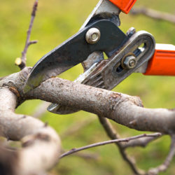The Dos and Don'ts of Summer Tree Care