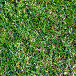 Tips for Keeping Your Buffalo Grass Lawn Healthy