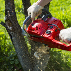 DIY Tree Removal: Why It's a Bad Idea