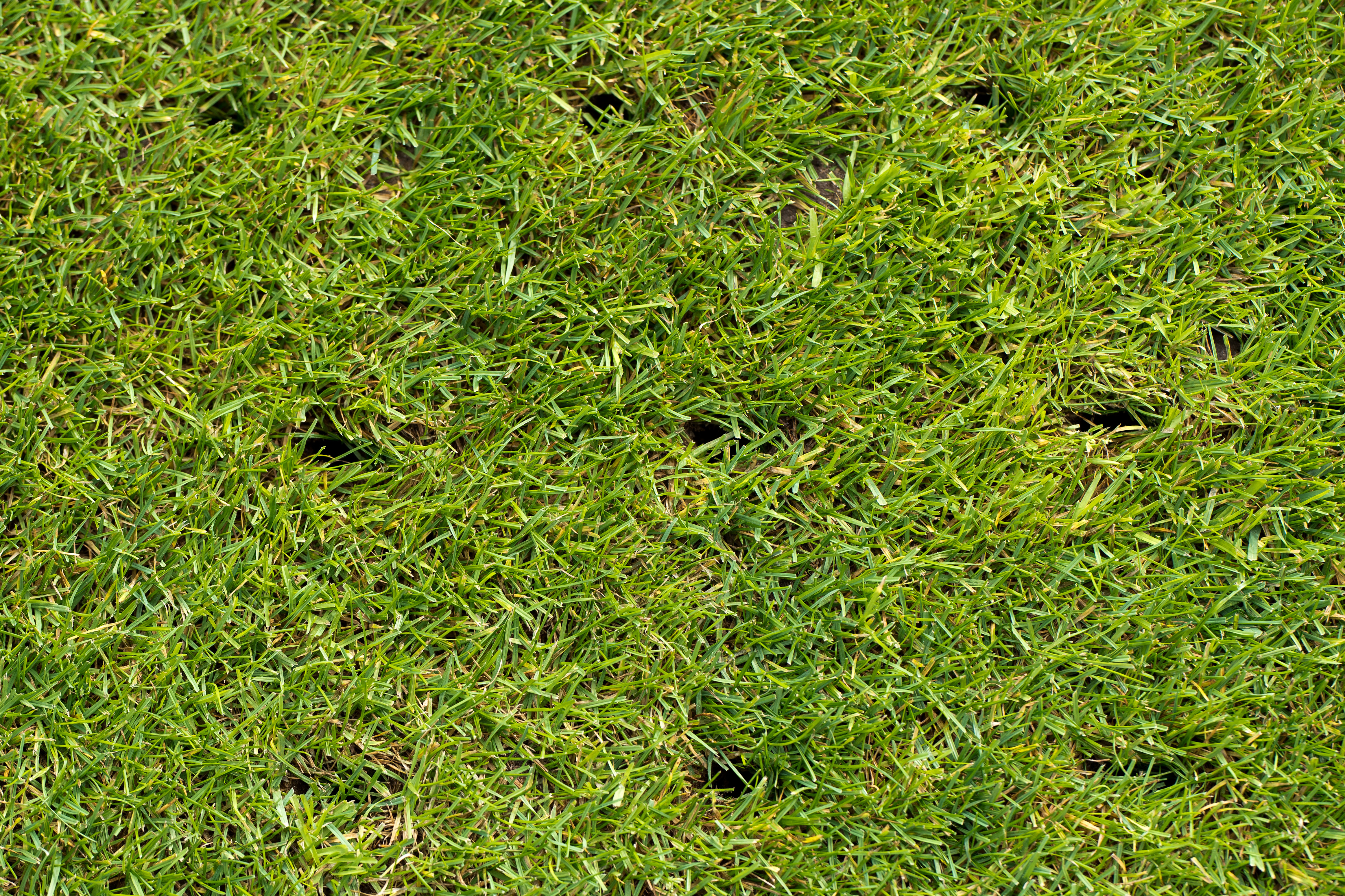 lawn with holes on a football field after aerating