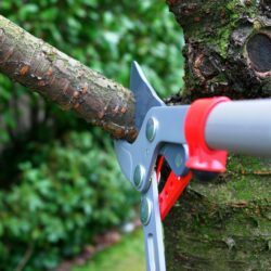 Common Reasons to Prune a Tree
