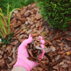 The Dos and Don'ts of Mulching