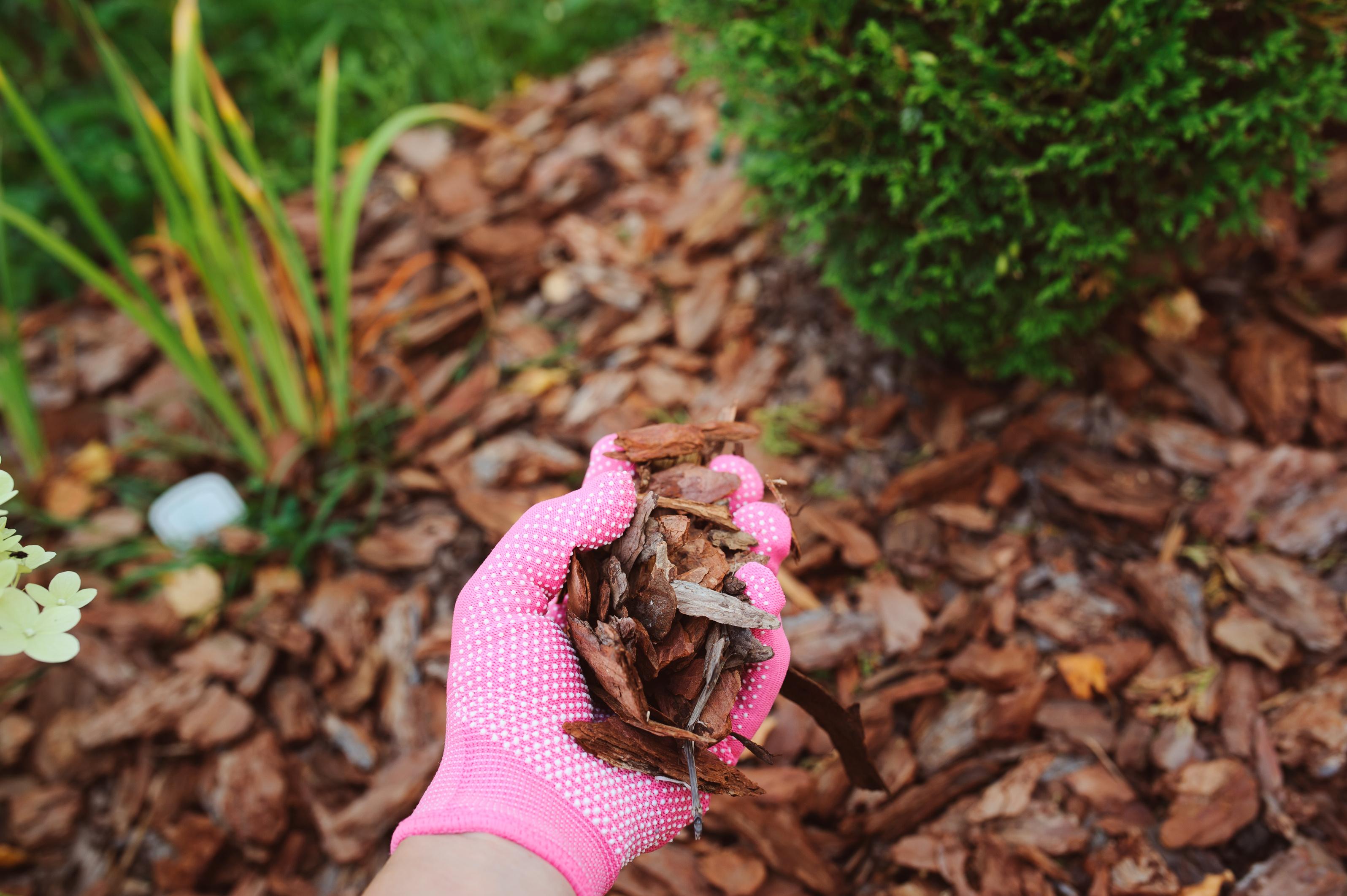 mulching garden beds with pine bark pieces