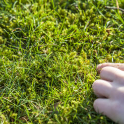 Tips for Preventing Common Lawn Problems