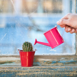 How to Rescue an Overwatered Cactus