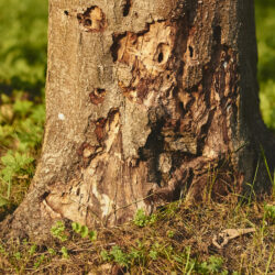 Watch Out for These Signs of an Insect Infestation on Your Trees