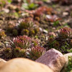 Your Autumn Landscaping Checklist