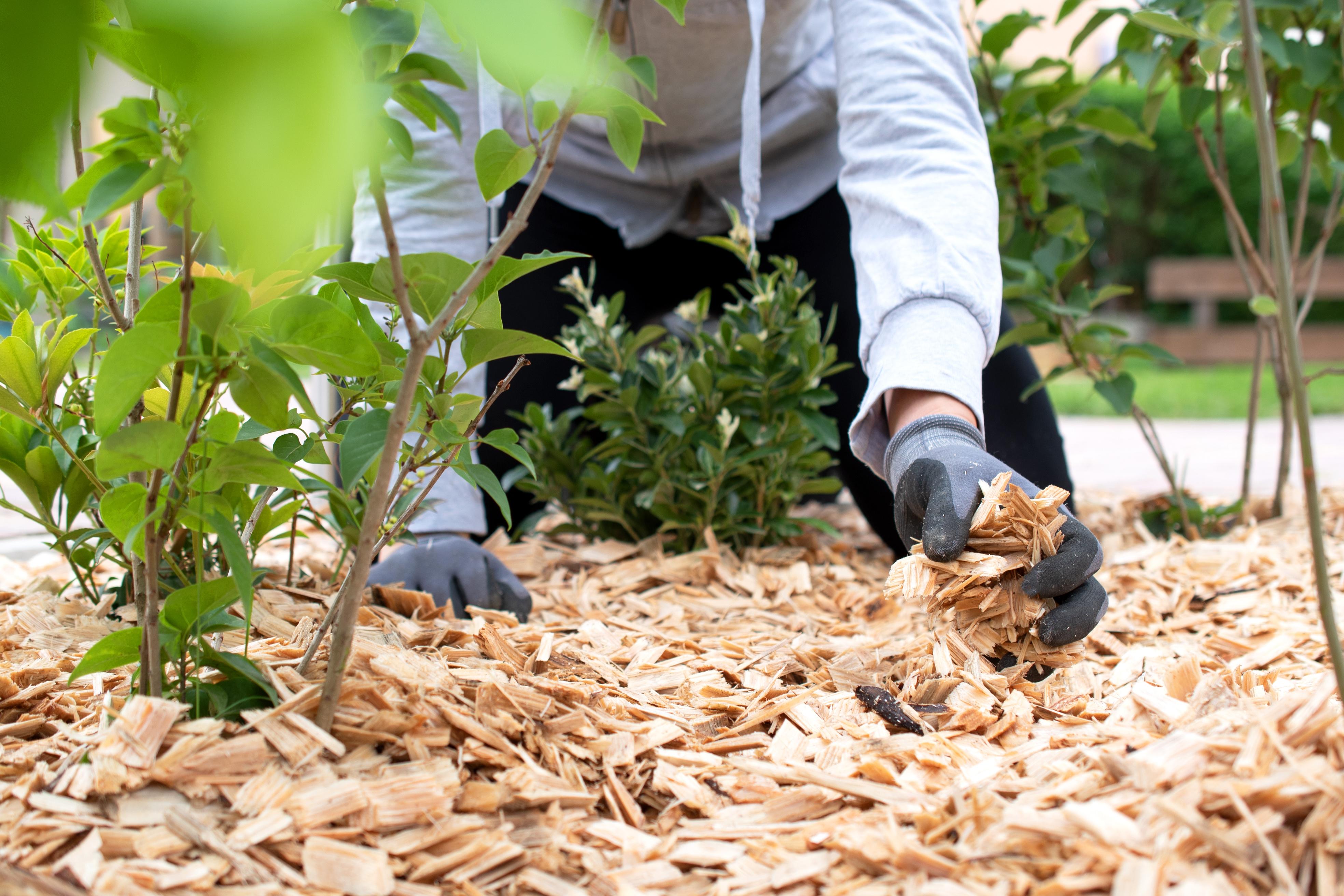 Gärtner arbeitet im Garten mit Mulch