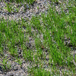 Common Questions About Lawn Overseeding