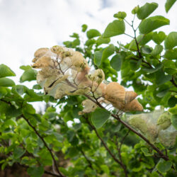 Is Your Landscape Infested with Spider Mites?