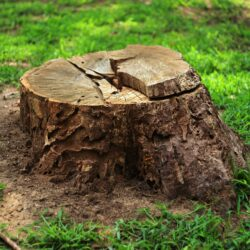 Here's Why You Shouldn't Leave a Tree Stump in the Ground