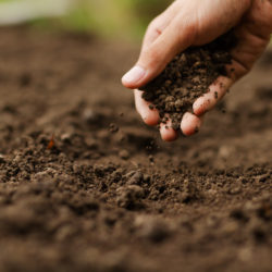 The Desert Gardener's Guide to Soil Testing