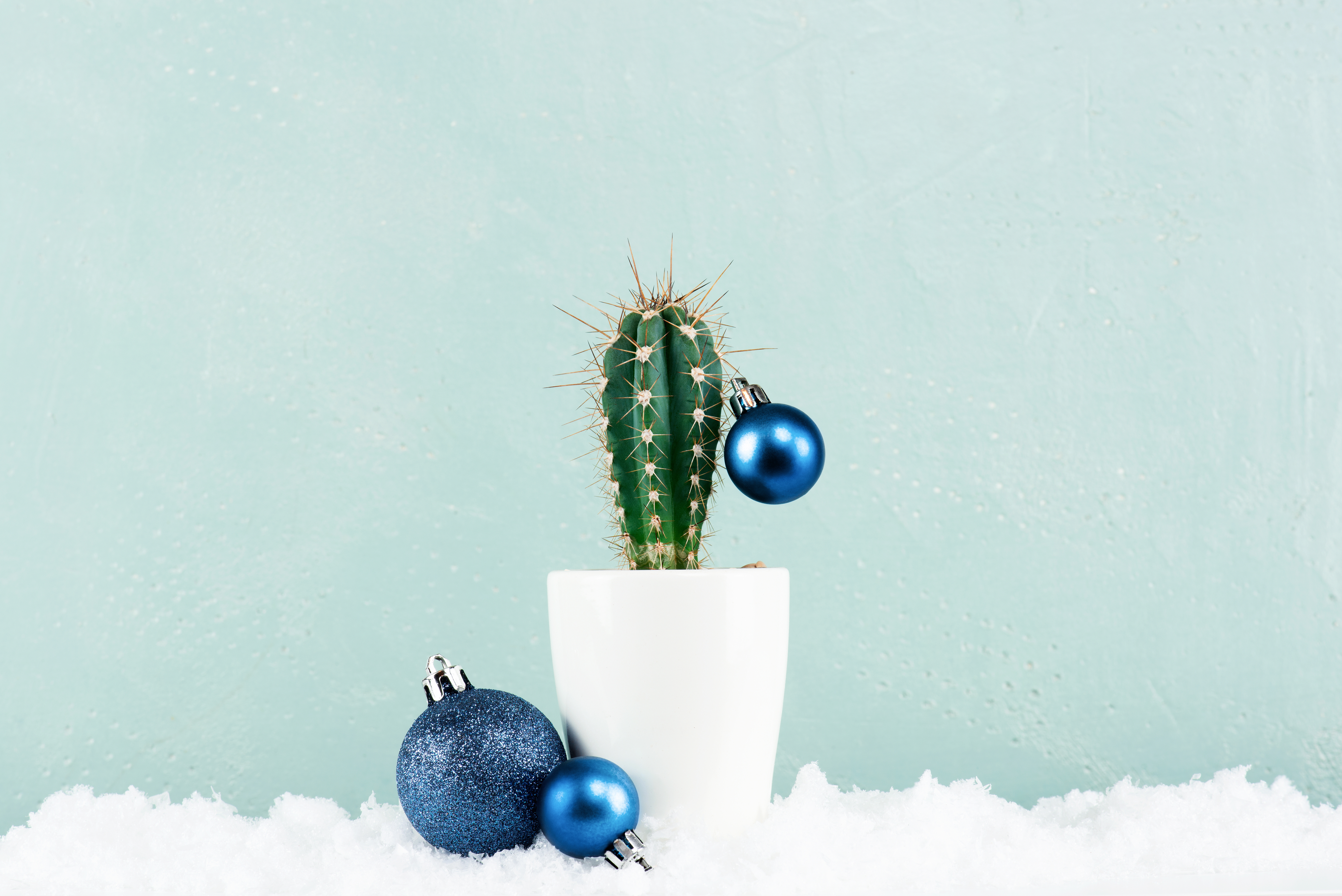 Funny Cristmas cactus decorated with blue Christmas balls with snow on the pastel blue background