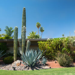 A Step-by-Step Guide to Landscape Design