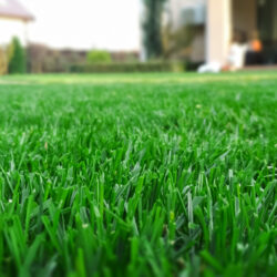 Taking Care of Your Lawn During Summer