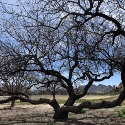 What You Need to Know About Winter Tree Care