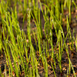 Essential Care Tips for Newly Seeded Lawns
