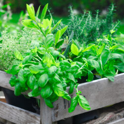 Answering Common Questions About Herb Gardens