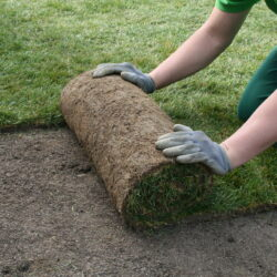How to Care for a Newly Sodded Lawn