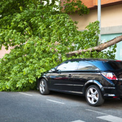 Is Your Tree about to Topple? Here's What You Should Watch Out For