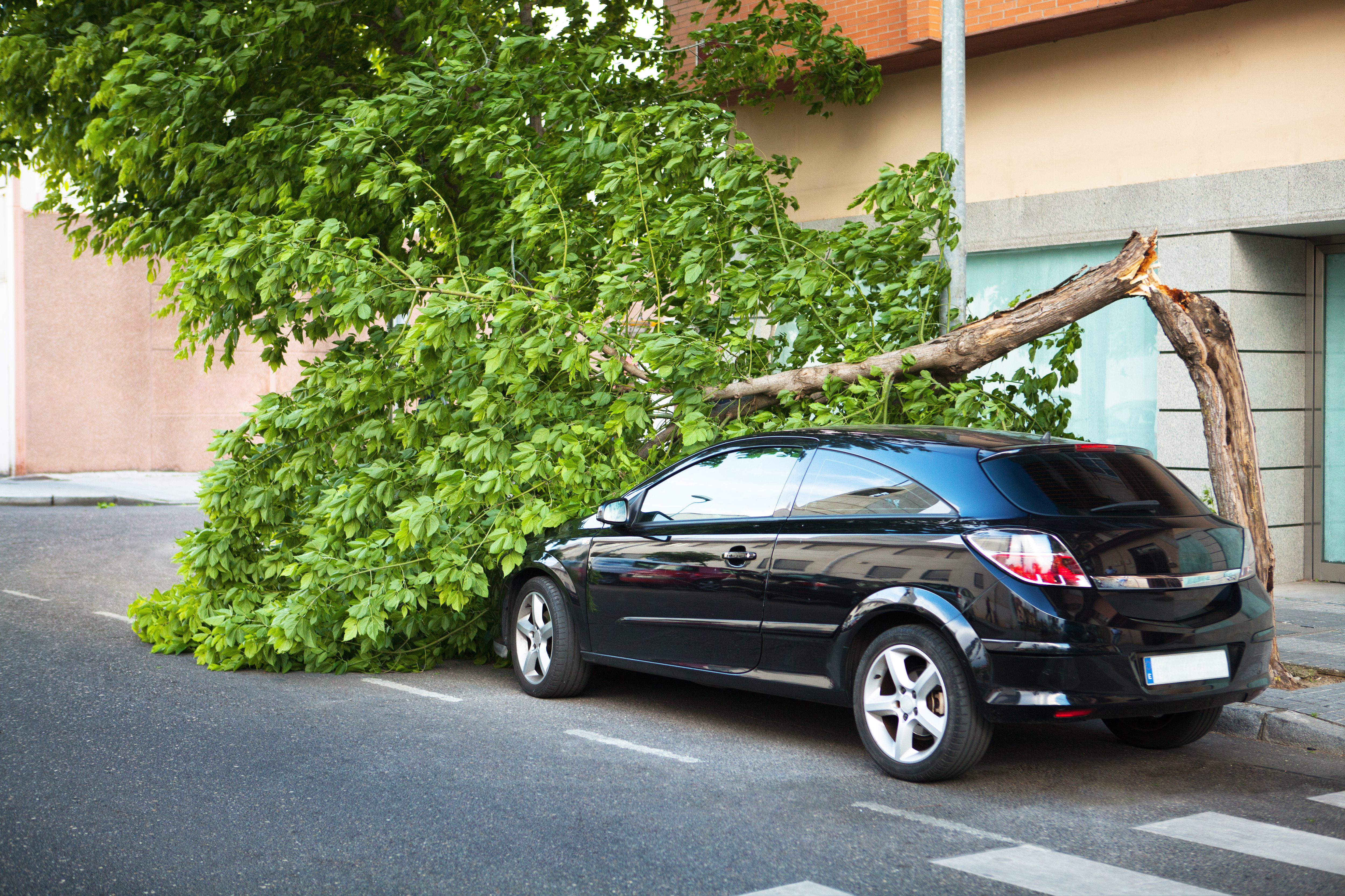 Broken tree on a car, after a storm.