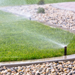 Summer Watering Tips for Your Garden