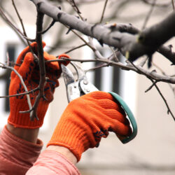 Should You Prune Trees in the Fall?