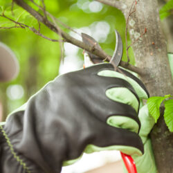 When You Should Trust an Arborist for Tree Care