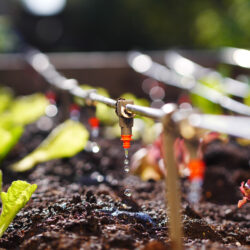 Important Maintenance Tasks for Your Drip Irrigation System