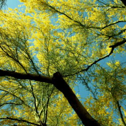 Spotting the Signs of Common Tree Problems