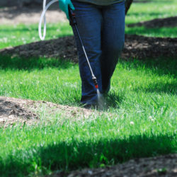 Spring Lawn Care 101