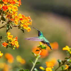 Which Desert Plants Are Good for Pollinators?