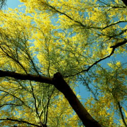 A Look at How the Desert Climate Can Affect Your Trees