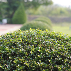 Shrub Maintenance 101