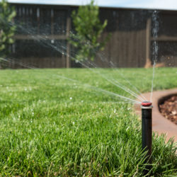 How to Reduce Water Waste in Your Landscaping