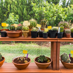 Common Types of Succulents to Use in Your Landscape