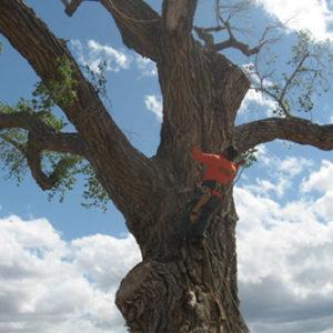 tree-service