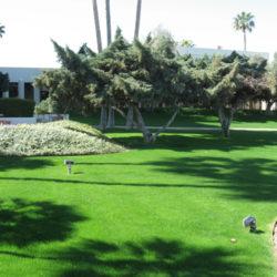 Best Types of Grass for Desert Climates