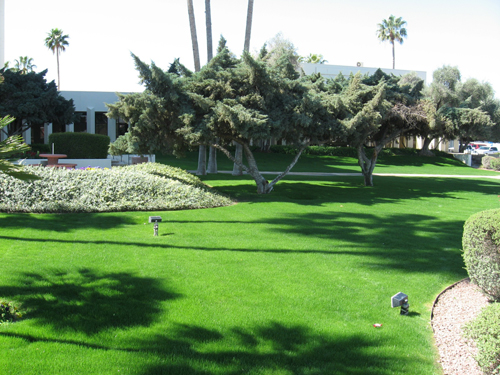 tucson-lawn-care-work (1)