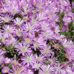 Beautiful Spring Flowers to Include in Your Hotel or Resort Landscape