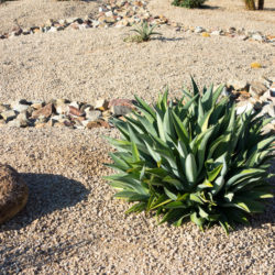 How Xeriscaping Can Help You Save Water